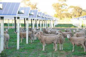 Agrisolar Coleambally